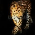 animals-16