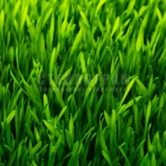 healthy grass pattern