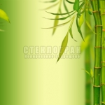 Young bamboo sprouds background