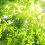 foliage-13
