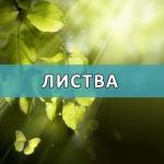 foliage-2