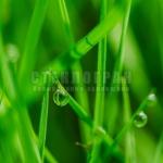 foliage-6