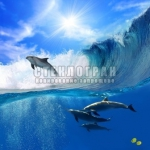 underwater-12