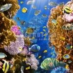 underwater-15