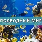 underwater-19